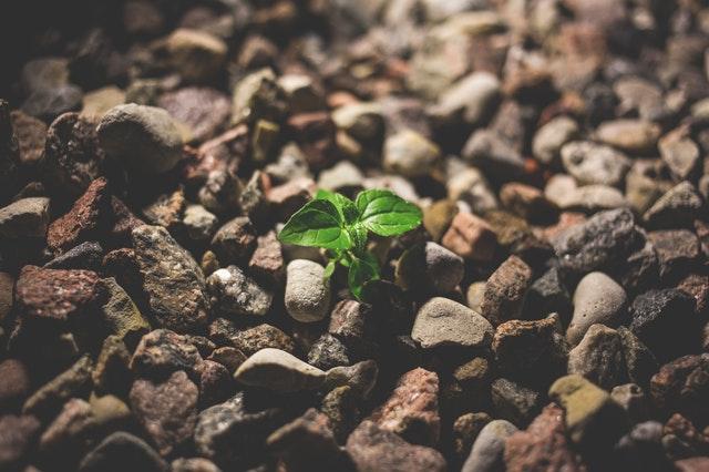 resilience; mindset